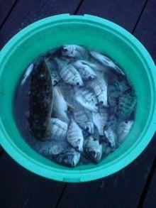 ハッシーのちぬ筏かかり釣り-20091111165011.jpg