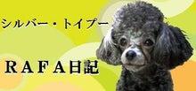 シルバー・トイプーRAFA日記