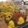 晩秋の勝山公園の画像