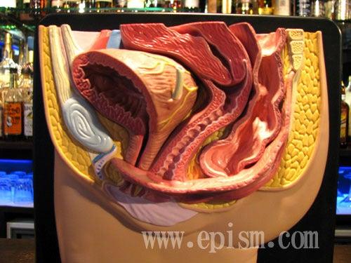 人の骨の名称を解剖のイラスト図下半身 | 人体 | 人 …