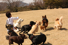 $HOTTA PET STORY-神田