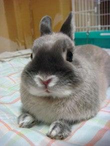 素晴らしき哉ピンポイント人生~音楽・お笑い・時々ウサギ~