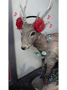 nolasnabのブログ-鹿子