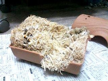 ハムスター飼育ブログ-巣箱の中