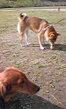 ダックス+チワワのJI.Family-091121_111901.jpg