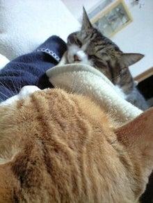ずれずれブログ…湘南で猫と暮らせば…-091119_1847~0001.jpg