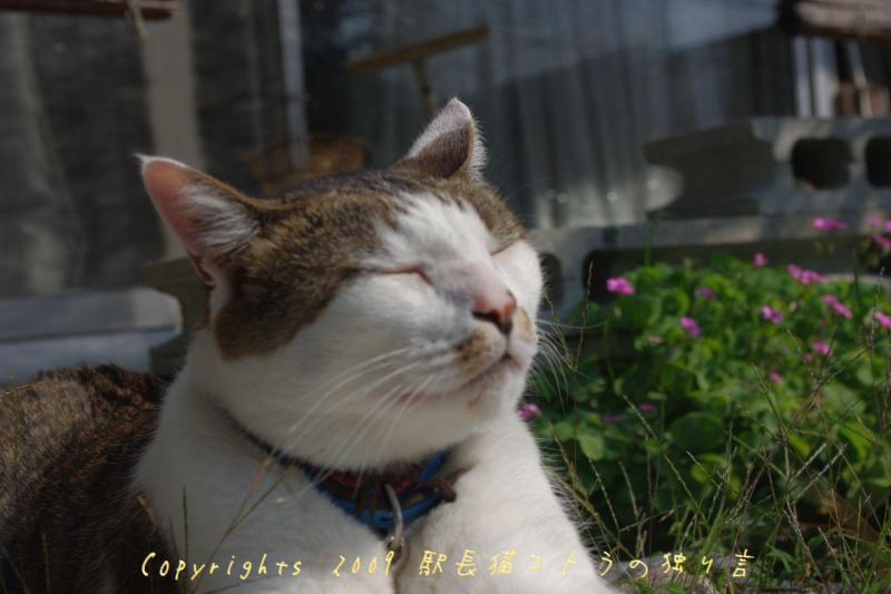 駅長猫コトラの独り言~旧 片上鉄道 吉ヶ原駅勤務~-ま、ええけど