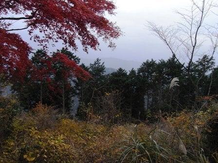 cinnamon log-Nov.29.09-3