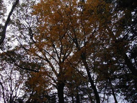 cinnamon log-Nov.29.09-2