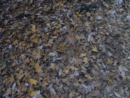 cinnamon log-Nov.29.09-1