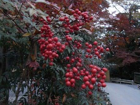 cinnamon log-Nov.29.09-7
