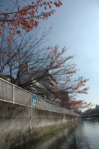 1歩・2歩・散歩♪-桜並木