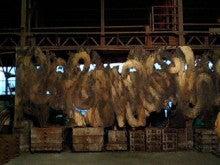 $国際環境アートムーブ川口BLOG          アート 芝川 旧芝川 再生 エコ 自然 汚染