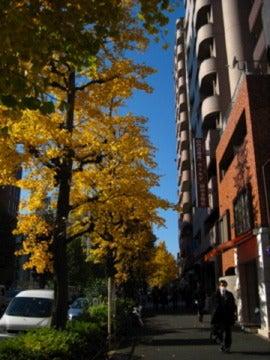 ウシロマエムキ-銀杏