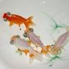 2009年12月3日現在、新着魚のご紹介です ※その2の画像