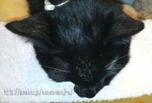 クマにゃんの闘病日記-72日目 扁平上皮癌の猫