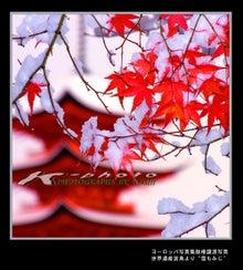 K-photo  色すがた-雪もみじ