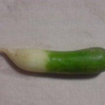 またまた変な野菜