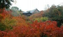 $cheltenhamのブログ-東福寺の紅葉