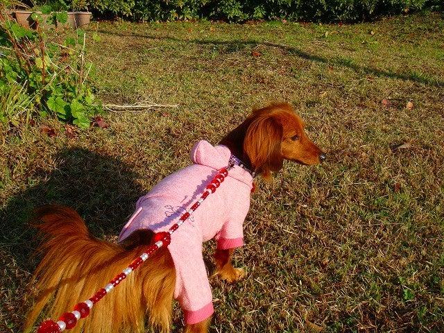 旅犬Lanileaのほほん風船記-きくのやの朝