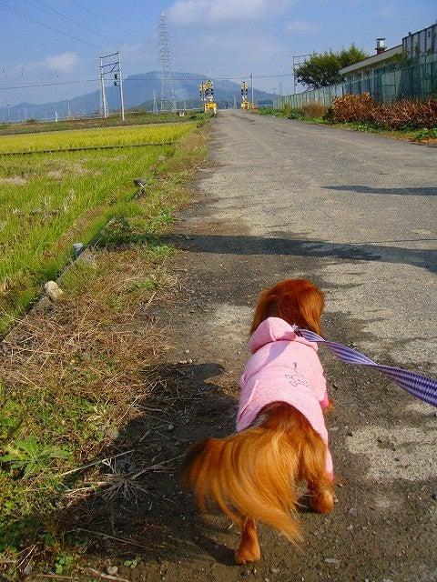 旅犬Lanileaのほほん風船記-近江八幡で散歩