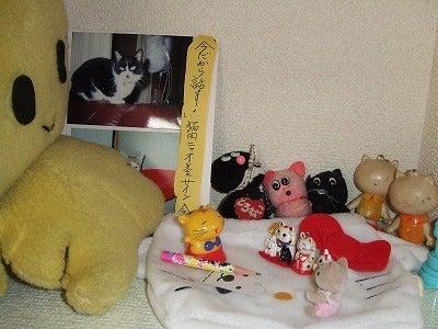素尻同盟☆あほせぶろぐ-飾り棚・猫田ニャオサイン会。