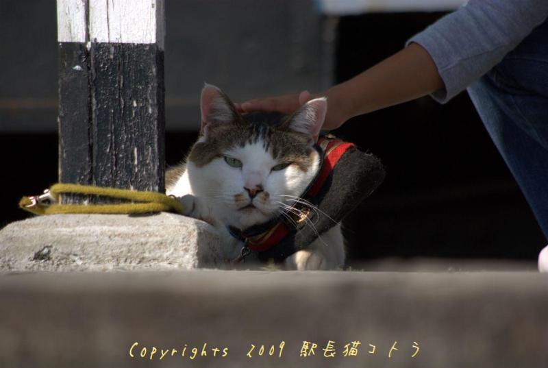 駅長猫コトラの独り言~旧 片上鉄道 吉ヶ原駅勤務~-しあわせ招く?招いてみる?