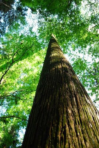 ■SOPA DE TAMA■NY在住たまの日々-Tree