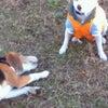 DOG RUN and フレンチジェルネイルの画像