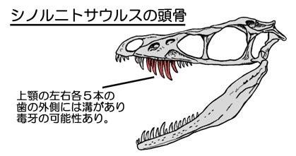 初の毒牙恐竜! | 川崎悟司 オフ...