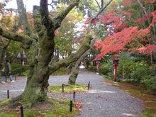 夫婦世界旅行-妻編-苔むす木々