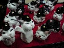 ぱぱぱ猫の日常~不思議な旦ちゃん&駅長猫コトラ~-2010010300370000.jpg