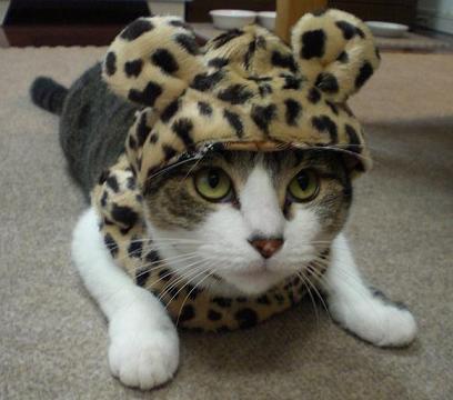 $くぅちゃんだって猫である。