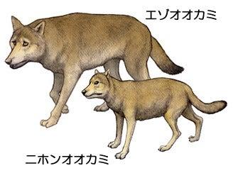 川崎悟司 オフィシャルブログ 古世界の住人 Powered by Ameba-ニホンオオカミとエゾオオカミ