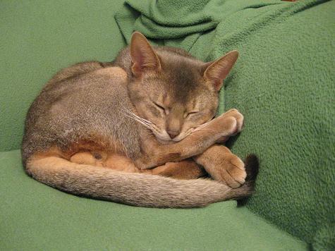 猫とまた旅-足枕1