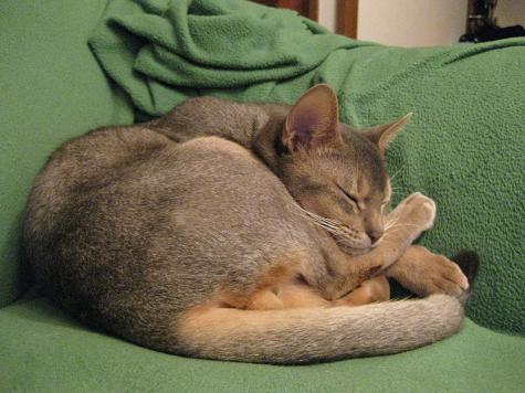 猫とまた旅-足枕2
