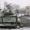 雪が降りましたの画像