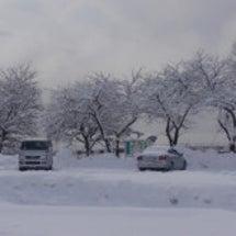 今日の余呉湖周辺の雪…