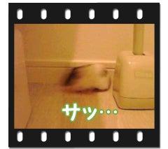 ユキとアオハムの飼育劇場-100117-2