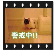 ユキとアオハムの飼育劇場-100117-1