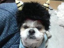 うちのわんこ ~シーズー犬Kaiの日記~-P1002068.jpg