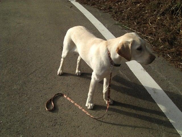 パピーウォーカー体験記 ~盲導犬になるまで~
