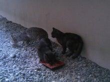 ネコとグルメと温泉と