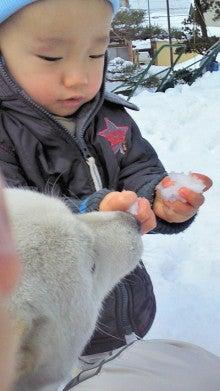 $北海道犬愛子のあいあい日記-雪ちょうだい