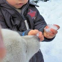 ハルくんと雪遊び