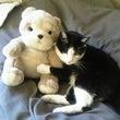 猫の写真~ヌイグルミ…