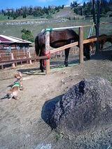 馬とミルク