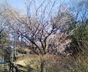 ラブエステ★ A嬢のブログ-20100124142059.jpg