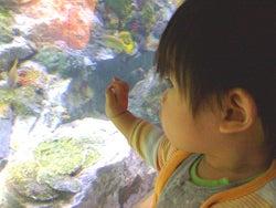 ニンプでした、今はママ。そして社長で、もちろん女!-aquarium1