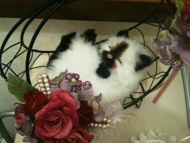 茶々吉とデジ一 のんびり旅-2010/1/25朝ちゃん猫